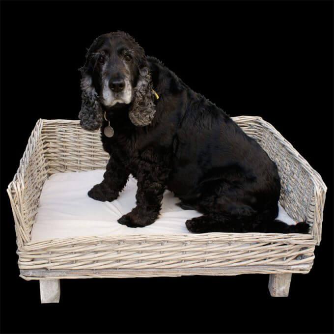 WIllow dog basket